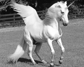 White Horse With Wings paint by numbers