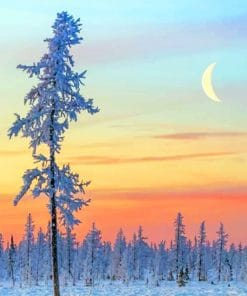 Winter Scenery paint by numbers