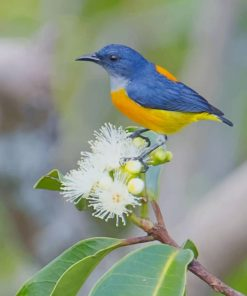 Yellow And Blue Bird paint by numbers