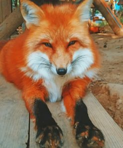 Adorable Fox Paint by numbers
