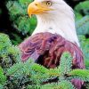 Aesthetic Eagle Paint by numbers