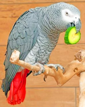 African Grey Paint by numbers