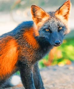 Black And Orange Fox Paint by numbers