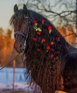 Black Horse With Red Flowers paint by numbers