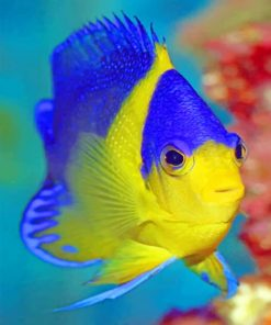 Blue And Golden Fish Underwater Paint by numbers