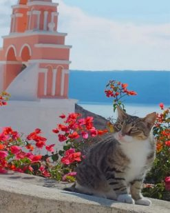 Cat Greece Island paint by numbers