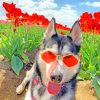 Cool Stylish Dog paint by numbers