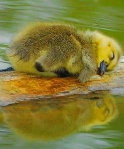 Cute Baby Duck Sleeping paint by numbers