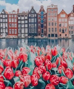 Flowers And Buildings Amsterdam paint by numbers