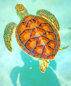 Hawksbill Sea Turtle paint by numbers