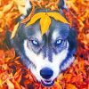 Husky In The Fall paint by numbers