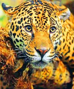 Jaguar paint by numbers
