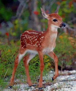 Key Deer paint by numbers
