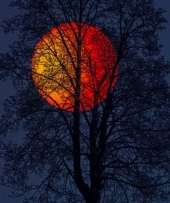 Night Moon Paint by numbers