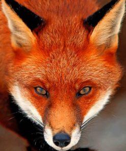 Orange Fox ppaint by numbers