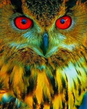 Owl With Red Eyes paint by numbers