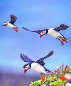 Flying Puffins paint by numbers