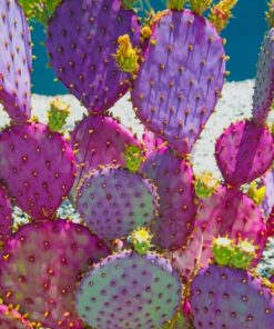 Purple Cactus paint by numbers