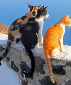 Santorini Cats paint by numbers