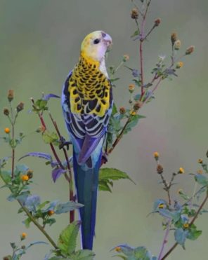 Small Parrot paint by numbers