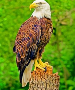Southern Bald Eagle Paint by numbers