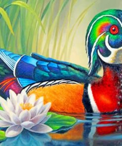 Wood Duck paint by numbers