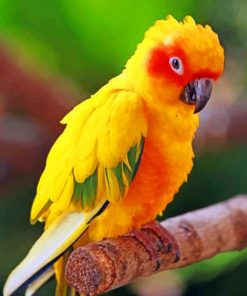 Yellow Macaw paint by numbers