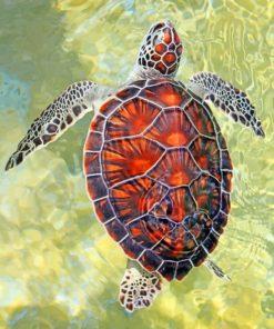 Ocean Turtle Paint by numbers