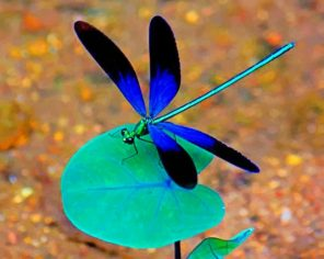 Black And Blue Dragonfly Paint by numbers
