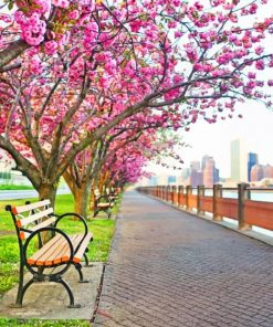 Cherry Blossom NYC paint by numbers