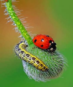 Ladybug paint by numbers