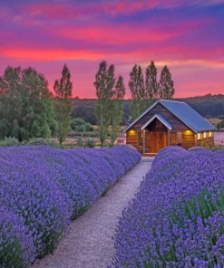 Cabin in lavender field paint by numbers
