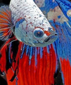 Siamese Fighting Fish Paint by numbers