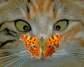 Cat And Butterfly paint by numbers