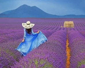 Woman In A Field Of Lavender Paint by numbers