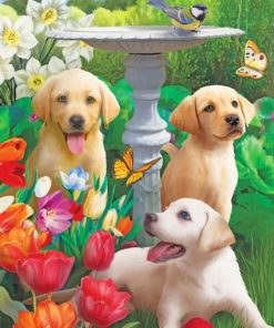 labradors in garden paint by numbers