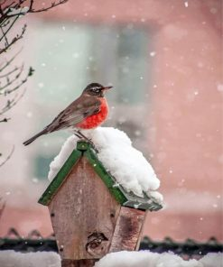 Bird On House In Snow paint by numbers