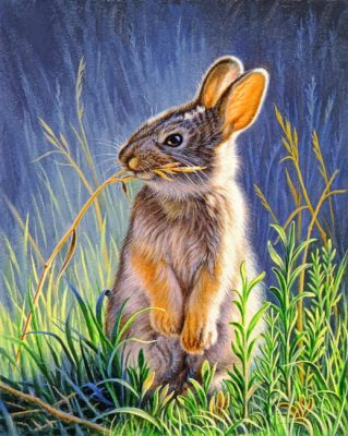 Bunny Rabbit paint by numbers