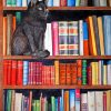 Cat On bookshelf paint by numbers
