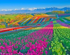 Colorful Flower Field paint by number