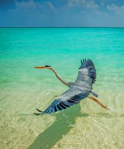 Crane In Maldives Beach paint by number
