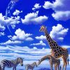 Giraffes And Zebras paint by number