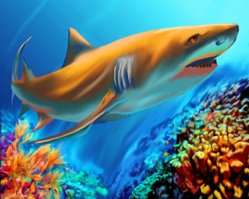 Great White Shark Art paint by numbers