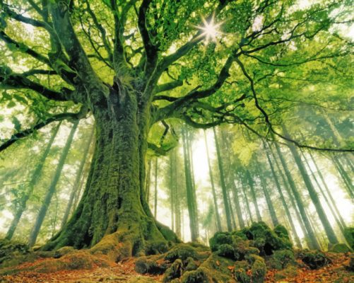 Green Forest Tree paint by number