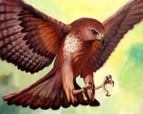 Hawk Bird Art paint by numbers