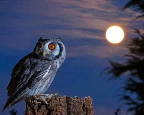 Night Owl Bird paint by numbers
