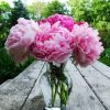Peonies In Glass paint by numbers