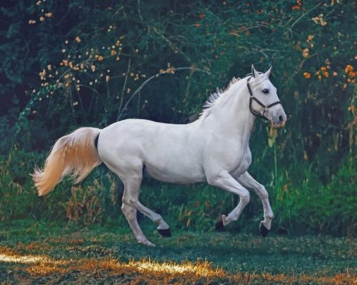 Running White Horse paint by numbers