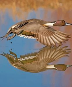 Aesthetic Duck In Flight Paint by numbers