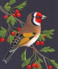 Bullfinch Bird Illustration Paint by numbers